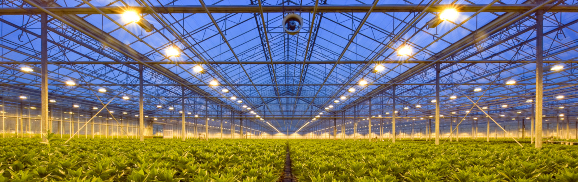 header-tuinbouw4